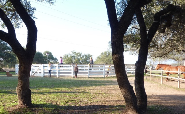 Equine and wine 1