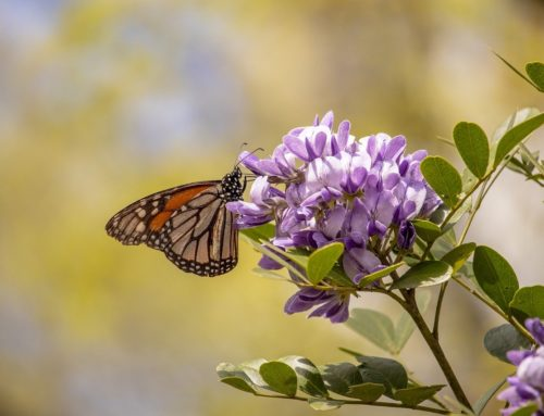 How we can recognize an invitation to shift our perspective (Beau and the Butterfly)