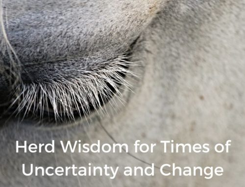 Herd Wisdom for Uncertain Times